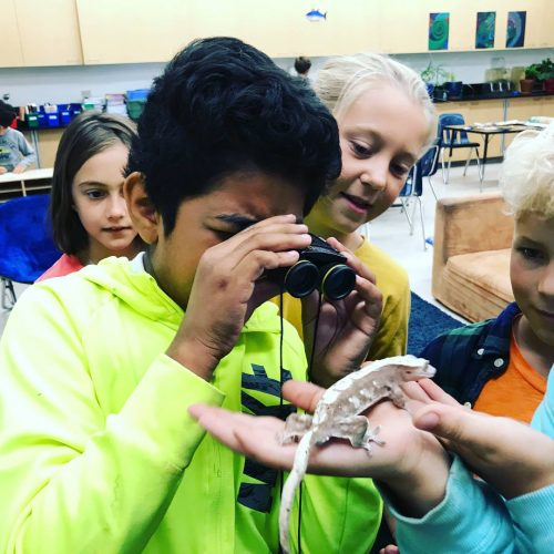 RVC elementary students examine a crested gecko in Fairfax