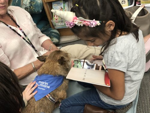 Ross Valley elementary student reading to a small dog