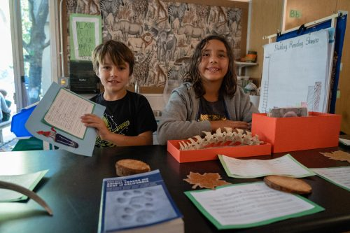 Ross Valley elementary children investigate coyote life with bones and research materials.