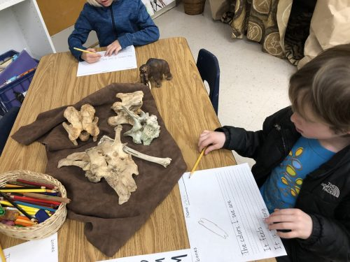 TK, Transitional Kindergarten science exploration of bones